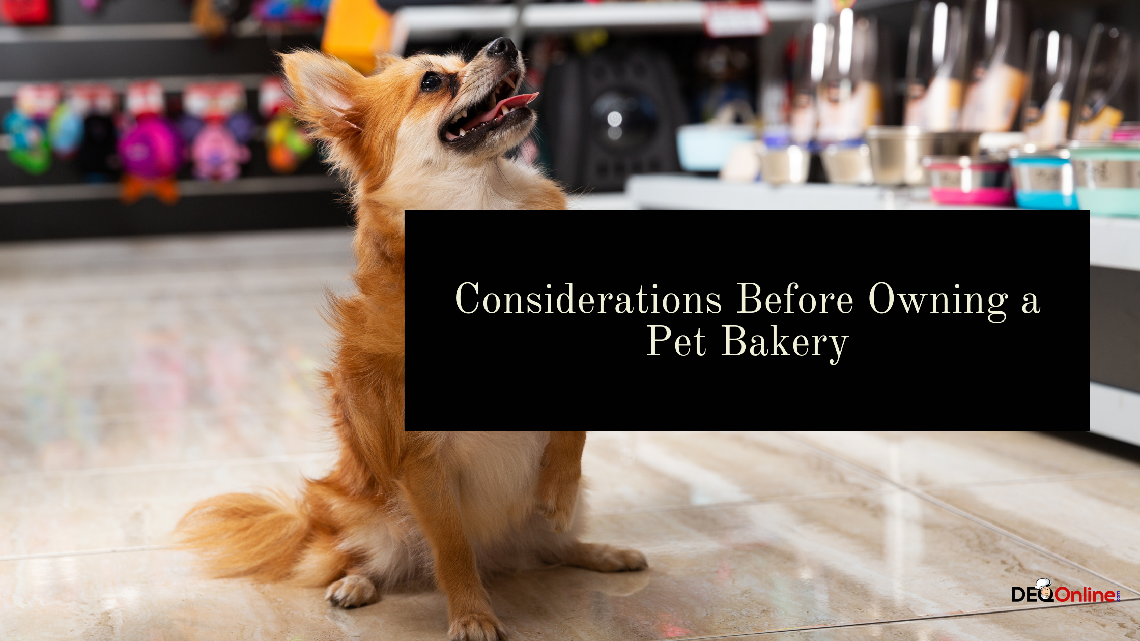Considerations Before Owning a Pet Bakery